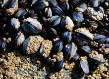 Muscles sur des roches Image libre de droits