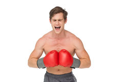 Muscly man wearing red boxing gloves and shouting Royalty Free Stock Image