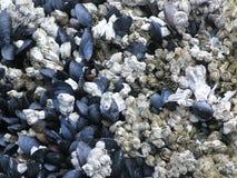 Muscoli alla spiaggia immagini stock