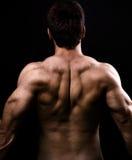 Muscoli dorsali di grande uomo nudo in buona salute Immagini Stock