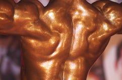 Muscoli dorsali potenti fotografie stock libere da diritti