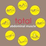 Muscolo di Adbomianal sul cerchio giallo Fotografie Stock Libere da Diritti