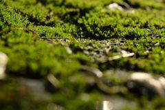 muscoso Fotografie Stock Libere da Diritti
