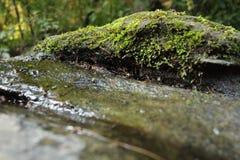 Muscoso bagni la roccia Immagine Stock Libera da Diritti