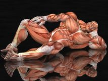 Muscular anatomical man Royalty Free Stock Images