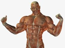 Muscular anatomical man Stock Image