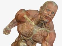 Muscular anatomical man Stock Photography