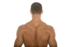 Muscular athletic body builder back Royalty Free Stock Photography