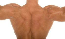 Muscular athletic body builder back Stock Photography