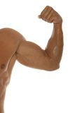 Muscular athletic body builder biceps Royalty Free Stock Photography