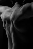 Muscular back. Of a caucasian guy royalty free stock photo