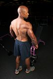 Muscular Back Shoulders and Triceps Royalty Free Stock Photography
