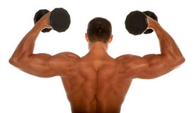 Muscular body builder Royalty Free Stock Images