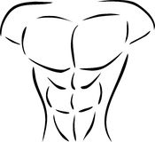 Muscular body Royalty Free Stock Photos