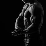 Muscular body Stock Image