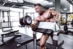 Muscular bodybuilder guy doing exercises with dumbbell. In gym Royalty Free Stock Image