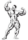 Muscular bodybuilder. 