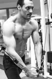 Muscular bodybuilder man training Stock Image