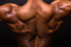 Muscular bodybuilder's back Royalty Free Stock Photography