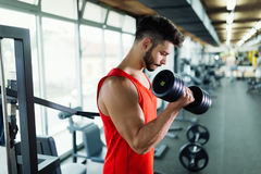 Muscular bodybuilder workout in gym doing biceps exercises. With dumbbells Royalty Free Stock Photo
