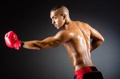 Muscular boxer. In studio shooting Stock Image