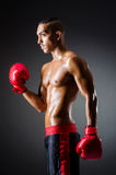 Muscular boxer. In studio shooting Royalty Free Stock Images