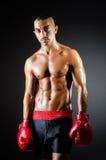 Muscular boxer. In studio shooting Royalty Free Stock Image