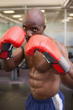 Muscular boxer in defensive stance Stock Images