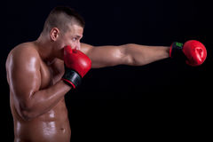 Muscular boxer with red gloves Royalty Free Stock Image