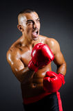 Muscular boxer in studio. Shooting Royalty Free Stock Images