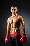 Muscular boxer. In studio shooting Stock Images