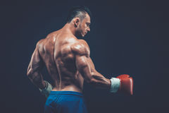 Muscular boxer in studio shooting, on black background. Royalty Free Stock Images