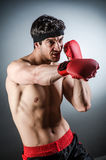 Muscular boxer wiith Royalty Free Stock Photo