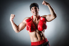 Muscular boxer wiith Royalty Free Stock Photography