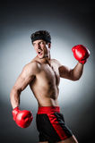 Muscular boxer Stock Images