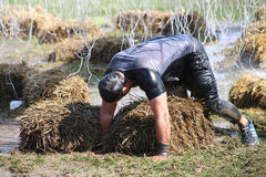 Muscular built man crawling over sheaf of hay Stock Images