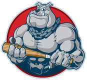 Muscular Bulldog with Bat Mascot Vector Illustration. Vector cartoon clip art illustration of a tough mean muscular bulldog mascot with a chain around its neck Stock Image