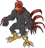 Muscular Cartoon Rooster Mascot Scowling. Vector cartoon clip art illustration of an angry muscular rooster or gamecock or chanticleer mascot with spurs and a royalty free illustration