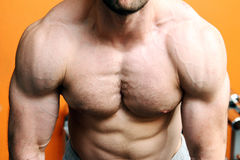 Muscular fitness model torso Royalty Free Stock Photography