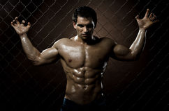 Muscular  guy Royalty Free Stock Image