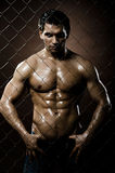 Muscular  guy Royalty Free Stock Images