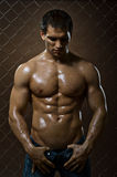 Muscular  guy Stock Images