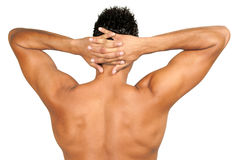 Muscular male back. In front of a white background Royalty Free Stock Photos