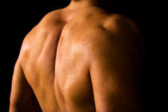 Muscular male back. On black background Royalty Free Stock Photography