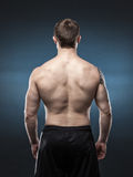 Muscular male back  on dark blue background Stock Photography