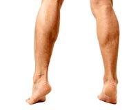 Muscular male calves Stock Image