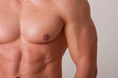 Muscular male chest Royalty Free Stock Images
