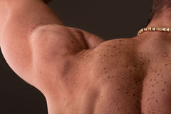 Muscular male shoulder. Muscular shoulder of man showing deltoid muscle, back view perspective with directional lighting Royalty Free Stock Image