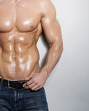 Muscular male torso. On grey background Stock Photography