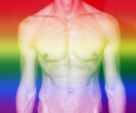 Muscular male torso with rainbow colors for gay pride Royalty Free Stock Image